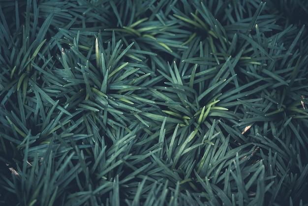 Fondo verde de la naturaleza planta y hoja