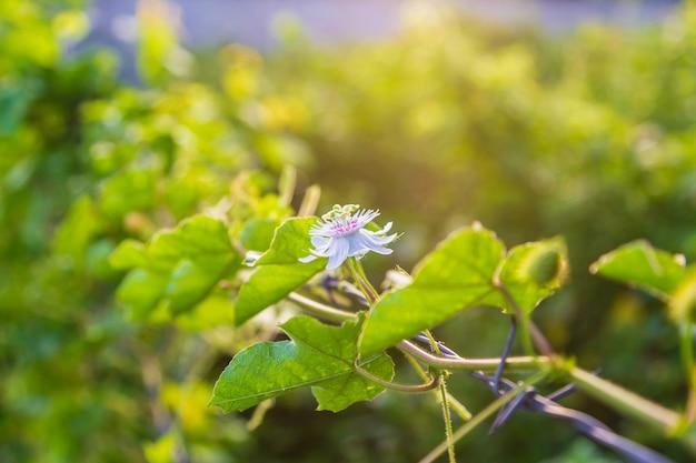 Fondo de vid de flor