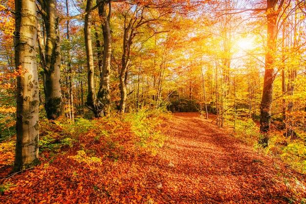 Forest road en el otoño. mundo de la belleza. paisaje
