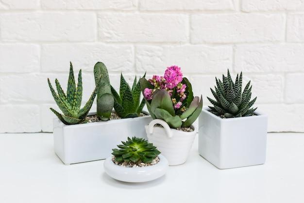 Formas cerámicas con plantas. varias plantas suculentas, cactus, plantas decorativas para el hogar