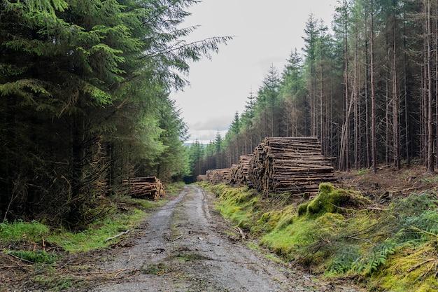 Forrest camino con troncos apilados a los lados de la carretera.
