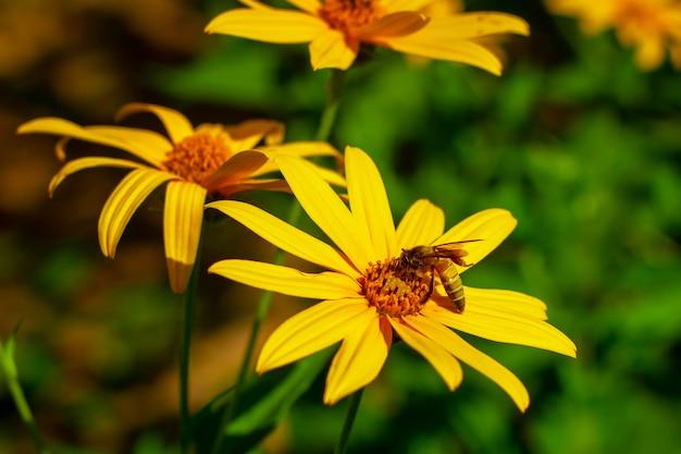 Foto de una abeja hermosa y flores al día soleado.