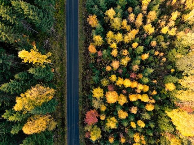 Foto aérea del bosque
