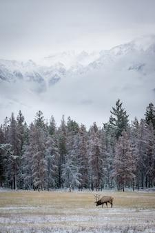 Foto de un alce pastando, un animal y una pintoresca naturaleza invernal