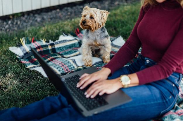 Foto de cerca, mujer estudiante sentada en la manta y hacer un picnic con su computadora portátil y su perro yorkshire terrier. mira el portátil.