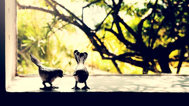 Foto de pareja de aves a través de la ventana de la naturaleza