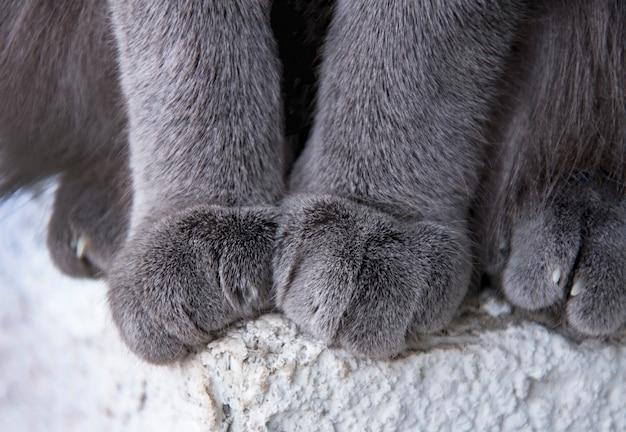 Foto de detalle de patas de gato suave mientras está sentado