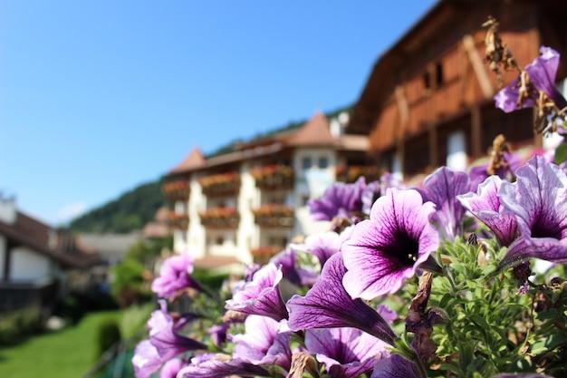 Una foto de flores en las montañas