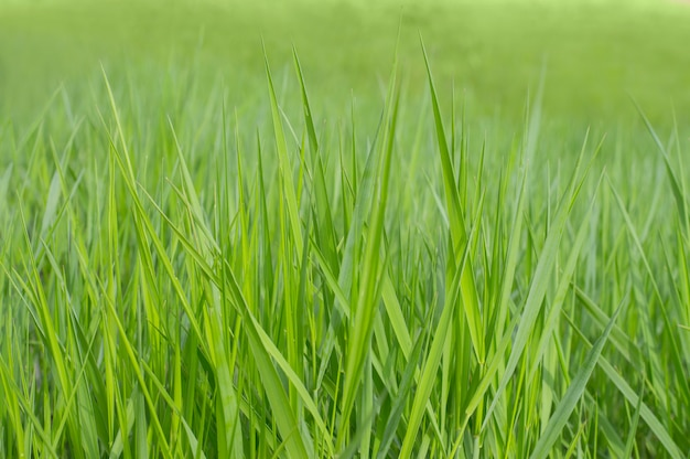 Foto fondo textura verde hierba