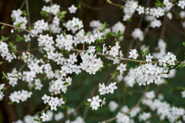 Foto hermosa del foco suave de las flores de la primavera.