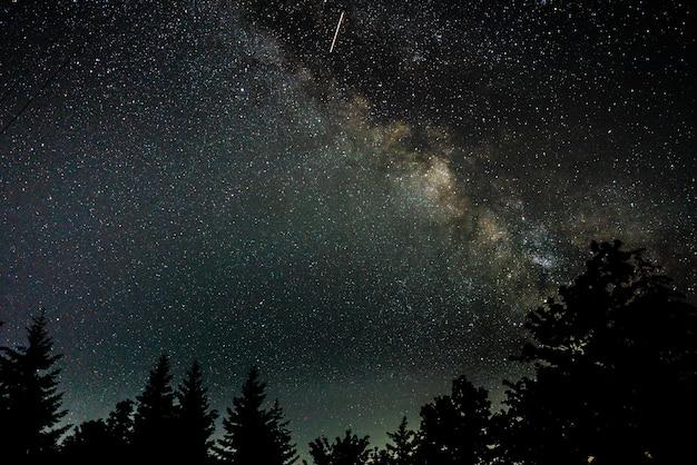 Foto hermosa silueta de árboles bajo un cielo nocturno estrellado