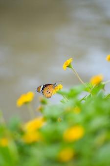 Foto de una mariposa monarca sobre una flor amarilla en un jardín.