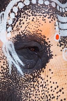 Foto de ojo de elefante sagrado en templo hindú de cerca