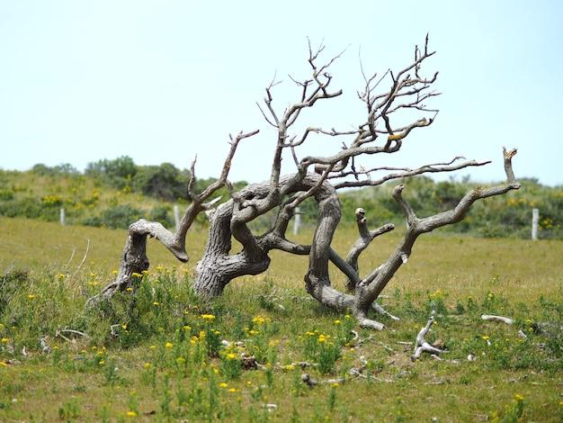 Foto de paisaje de un árbol muerto con un cielo azul claro