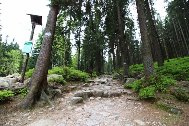 Foto de paisaje de árboles altos con grandes rocas en un cielo despejado
