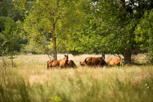 Foto de paisaje de caballos salvajes en el bosque de letea