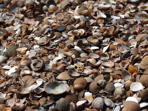 Foto de paisaje de una variedad de almejas de concha