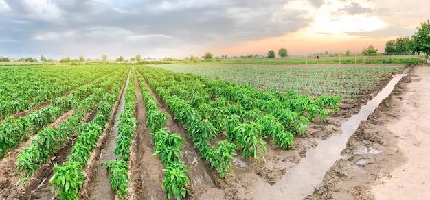 Foto panorámica de la agricultura.