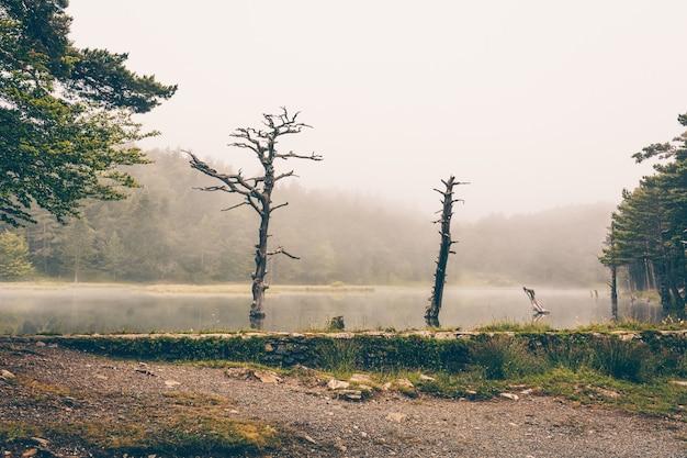 Foto panorámica de un paisaje de montaña y parcialmente cubierto de niebla