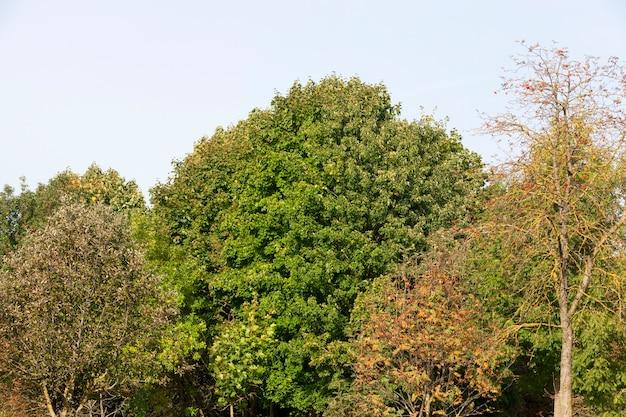 Foto primer plano de un bosque mixto contra el cielo azul