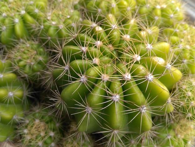 Foto de primer plano de cactus verde con espigas brillantes - imagen