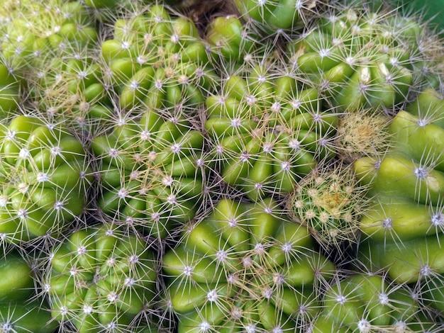 Foto de primer plano de cactus verde con espigas brillantes