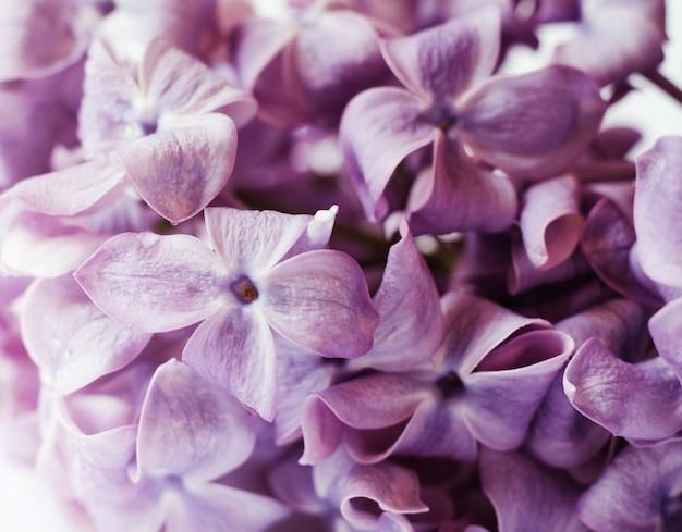 Foto de primer plano de hermosas flores lilas.