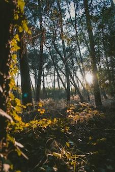 Foto de primer plano vertical de las hojas de los árboles en un bosque rodeado de vegetación durante el amanecer