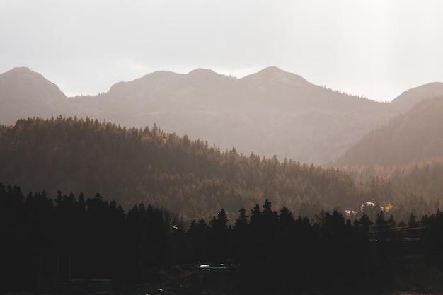 Fotografía aérea de árboles y montañas.