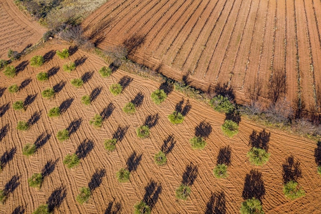 Fotografía aérea de tierra arada, campo de olivos