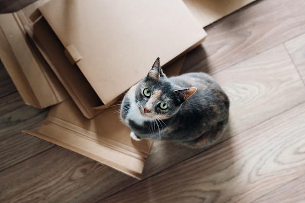 Fotografía cenital de un lindo gato doméstico mirando hacia arriba y sentado junto a tablas y cajas de madera
