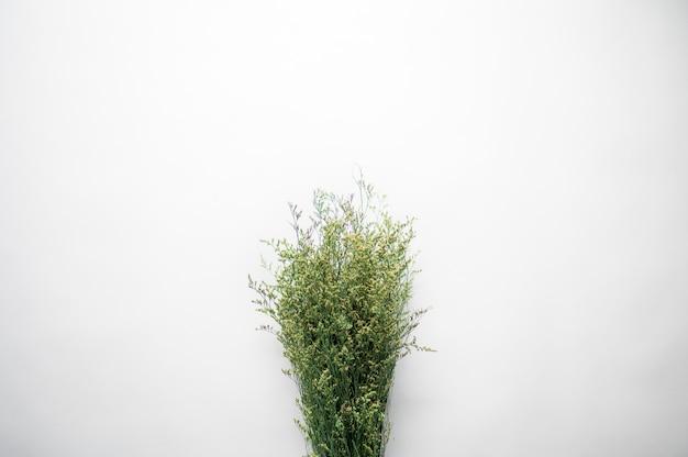 Fotografía cenital de un montón de ramitas de plantas sobre una superficie blanca