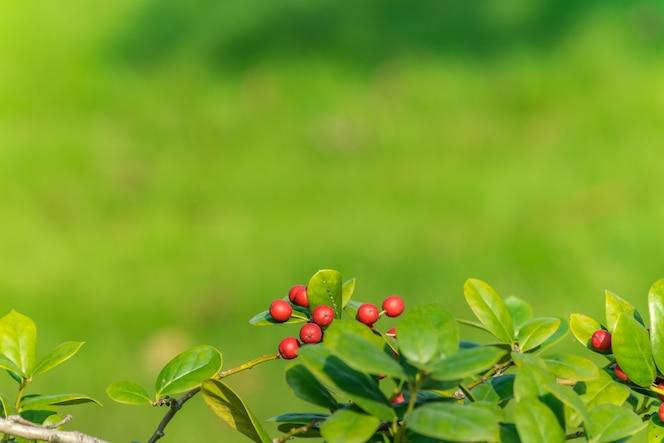 Fotografía fresca natural del otoño 10yldhm