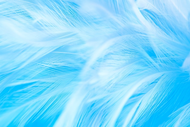Fotografía macro de hermosas plumas azules de suavidad línea de textura vintage
