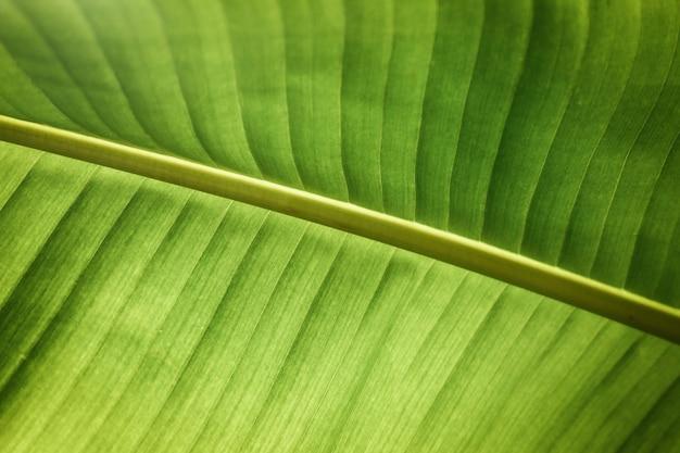 Fotografía macro de hoja tropical
