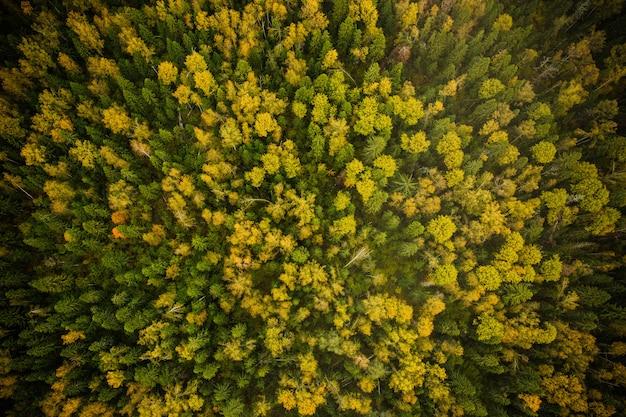 Fotografía de la naturaleza desde el aire