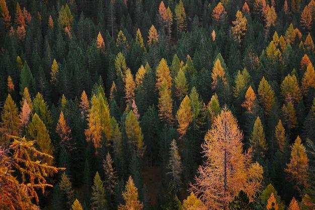 Fotografía de vista aérea del bosque