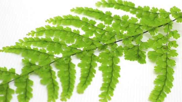 Fotos exoticas de hojas tropicales