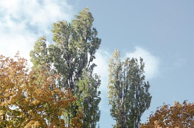 Fragmento de árboles cuyas hojas cambian de color en la temporada de otoño.