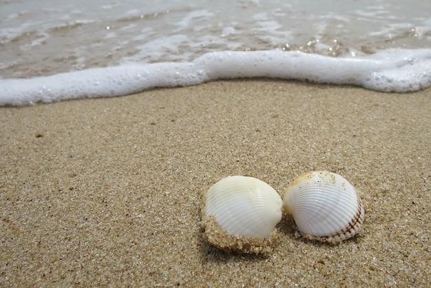 Fragmentos de conchas blancas en la playa con las olas en el verano.