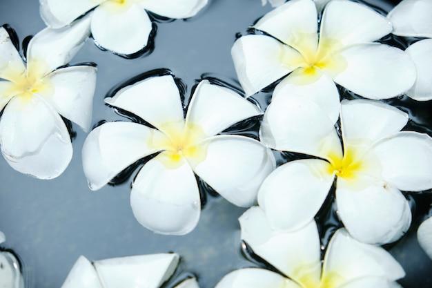 Frangipani blanca flor tropical en un tazón de agua