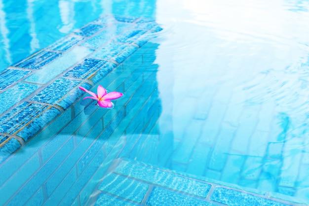 Frangipani rosa en piscina con agua turquesa.