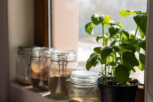Frascos y arreglo de plantas