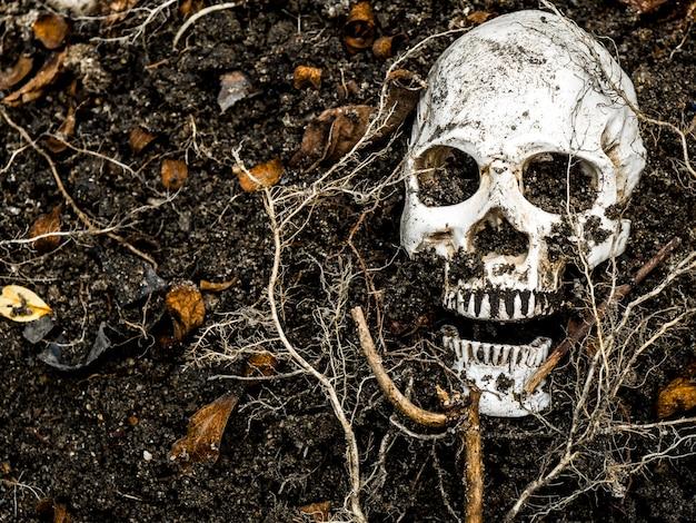 En frente del cráneo humano enterrado en el suelo con las raíces del árbol en el lado.