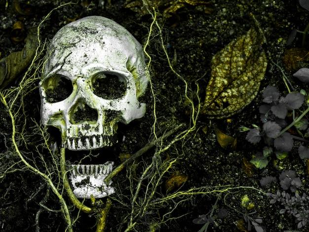 En frente del cráneo humano enterrado en el suelo con las raíces del árbol a un lado.
