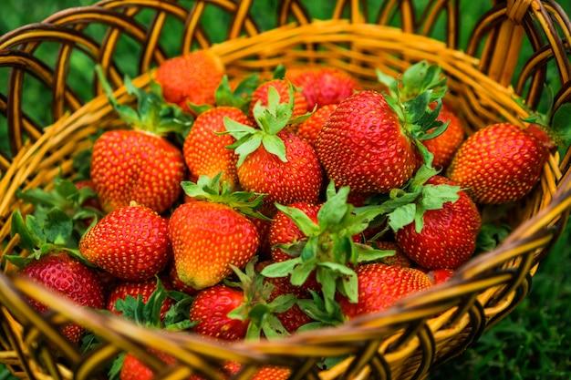 Fresas en una cesta