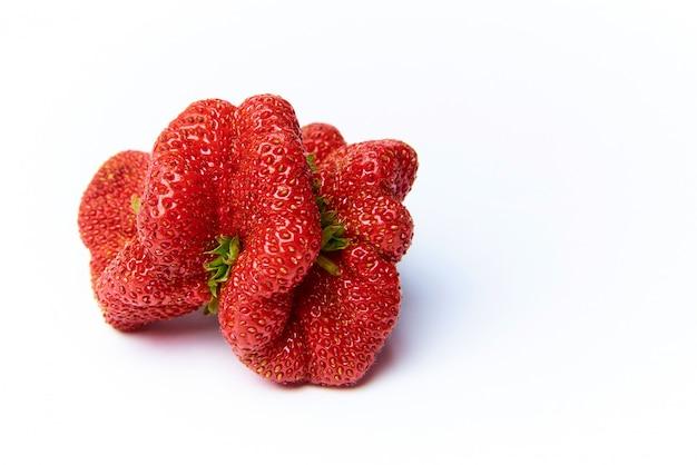 alimentos transgénicos qué son