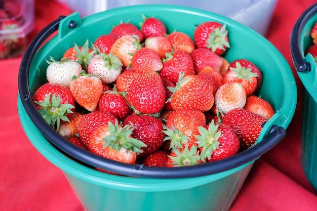 Fresas frescas en el árbol, rojo bayas maduras en cesta verde.