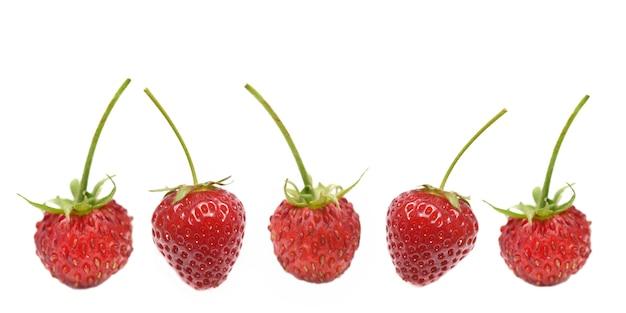 Fresas frescas en línea con tallo aislado sobre fondo blanco.