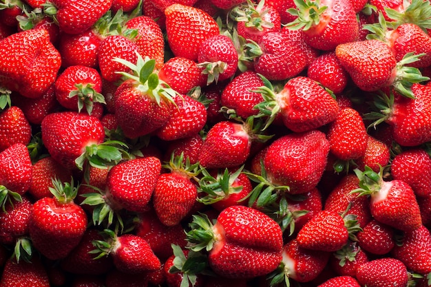 Fresas maduras frescas